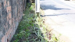Lixeiras viciadas viram jardins em Manaus