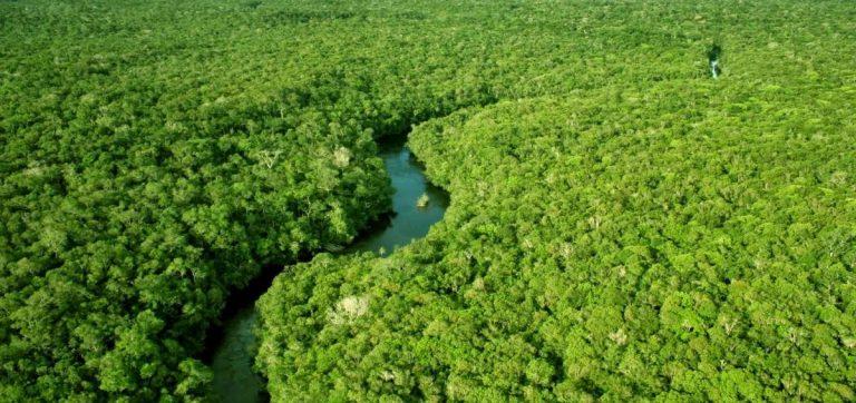 Fundo Amazônia vai receber doação de US$ 70 milhões do governo da Noruega