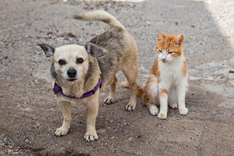 """ESBAM faz campanha """"NatAU Animal"""" para arrecadar mantimentos animais abandonados em abrigos"""