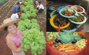 MPF recomenda que 30% de compra da merenda escolar no AM seja proveniente de agricultura familiar