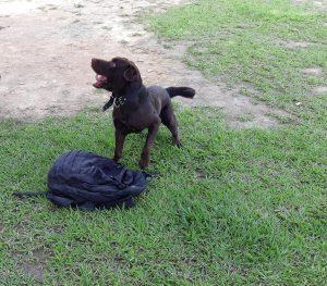 Cão fará busca por drogas no Centro de Detenção Provisória Masculina II