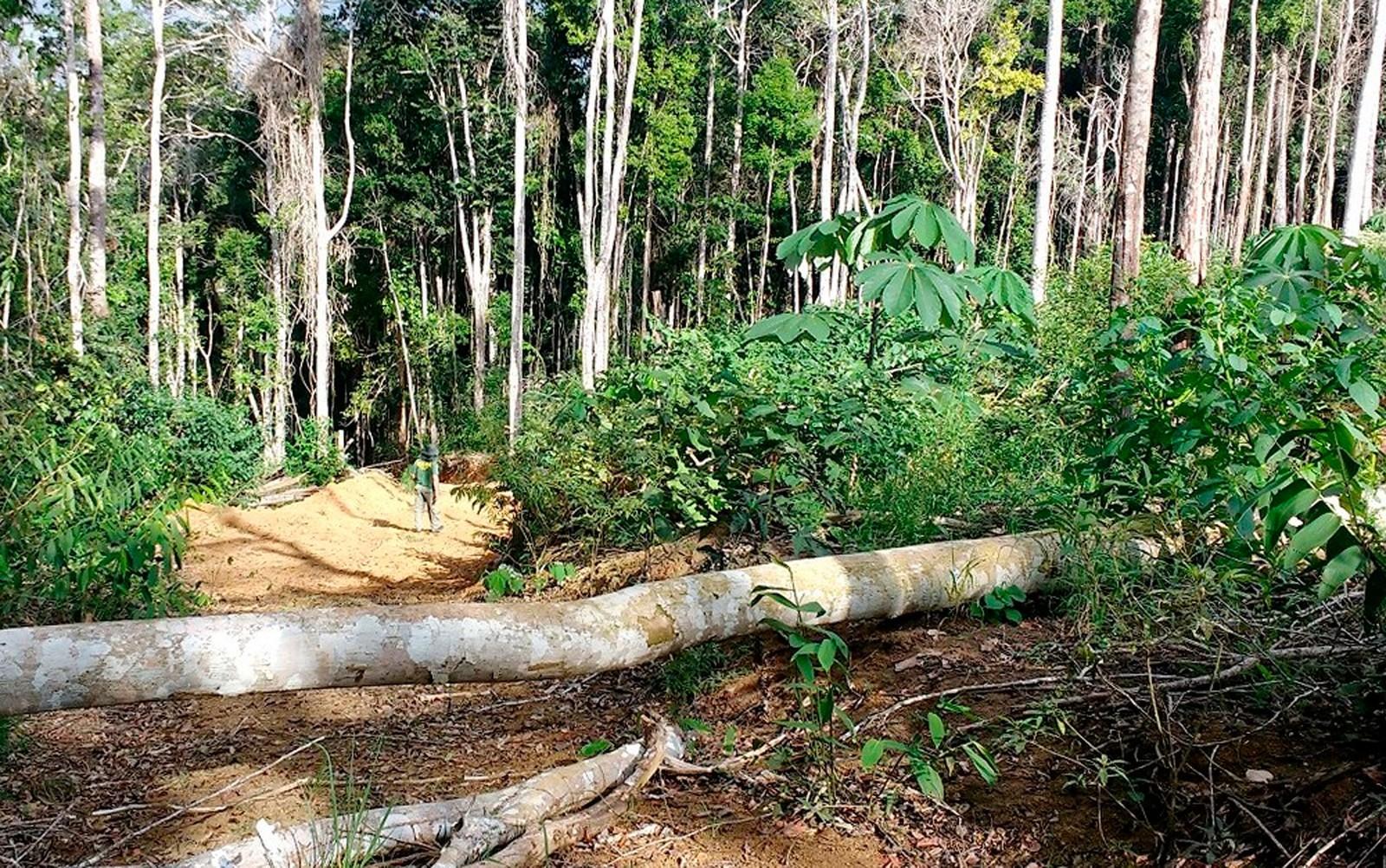 Desmatamento da Mata Atlântica cresce em cinco estados do Brasil
