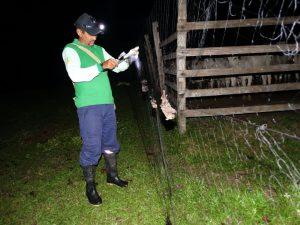 FVS anuncia redução de 26% dos casos de agressões por morcegos no Amazonas, nos primeiros cinco meses do ano