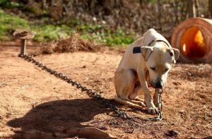 Ocorrências de maus-tratos a animais aumentam 110% neste ano