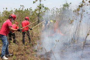 Amazonas tem redução de 6% no número de focos de calor, no primeiro semestre de 2019