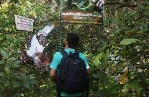 Parque Estadual Sumaúma recebe atividades gratuitas da Virada Sustentável neste fim de semana