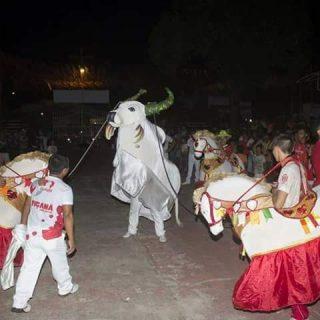 Cumprindo a tradição, Boi Garantido morre nesta quarta-feira (17), na Baixa do São José