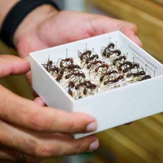 Formigas são usadas para monitoramento da biodiversidade na Amazônia