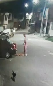 Por causa de xixi, homem espanca cachorro em Belém (PA)
