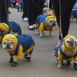 Feira de adoção e concurso de cosplay, para pets, fazem parte da programação do Dia do Amigo, no Millennium