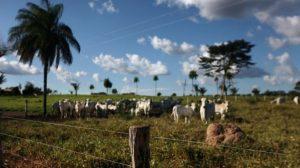 Especialista reforça que pecuária na Amazônia pode seguir modelo sustentável sem agredir a natureza
