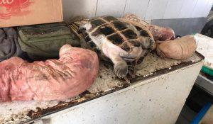 Carnes de animais silvestres são apreendidas no porto da Ceasa
