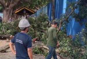 Manaus, no AM, recebe manejo de árvores da espécie Oitizeira