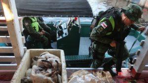 Dono de embarcação é preso com animais silvestres mortos e pescado ilegal em porto de Manaus