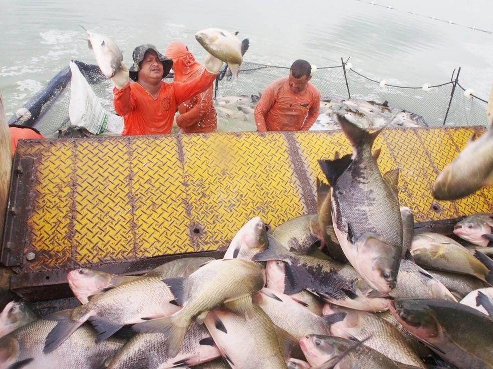 Feirão do Pescado da ADS começa nesta terça-feira (30) em Manaus