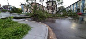 Árvores caem com chuva forte e bloqueiam trânsito em ruas de Manaus